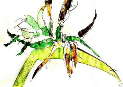 06 - Flor del paraíso