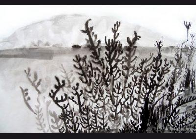 15 - Salicòrnia